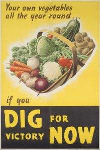 Dig for victory poster of a basket of vegetables that grow well in the UK (carrot, cabbage, potatoes etc) on a yellow background