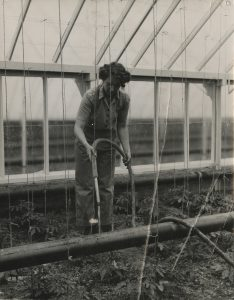 Female student with a hosepipe watering the tomato plants
