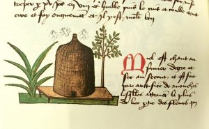 Extract from a page showing a bee hive with a couple of bees flying around it, next to a paragraph of text in French describing the medicinal properties of honey.