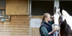 Vet school undergraduate student examining a horse.