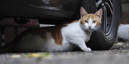 Cats are dying from antifreeze poisoning - The News Room