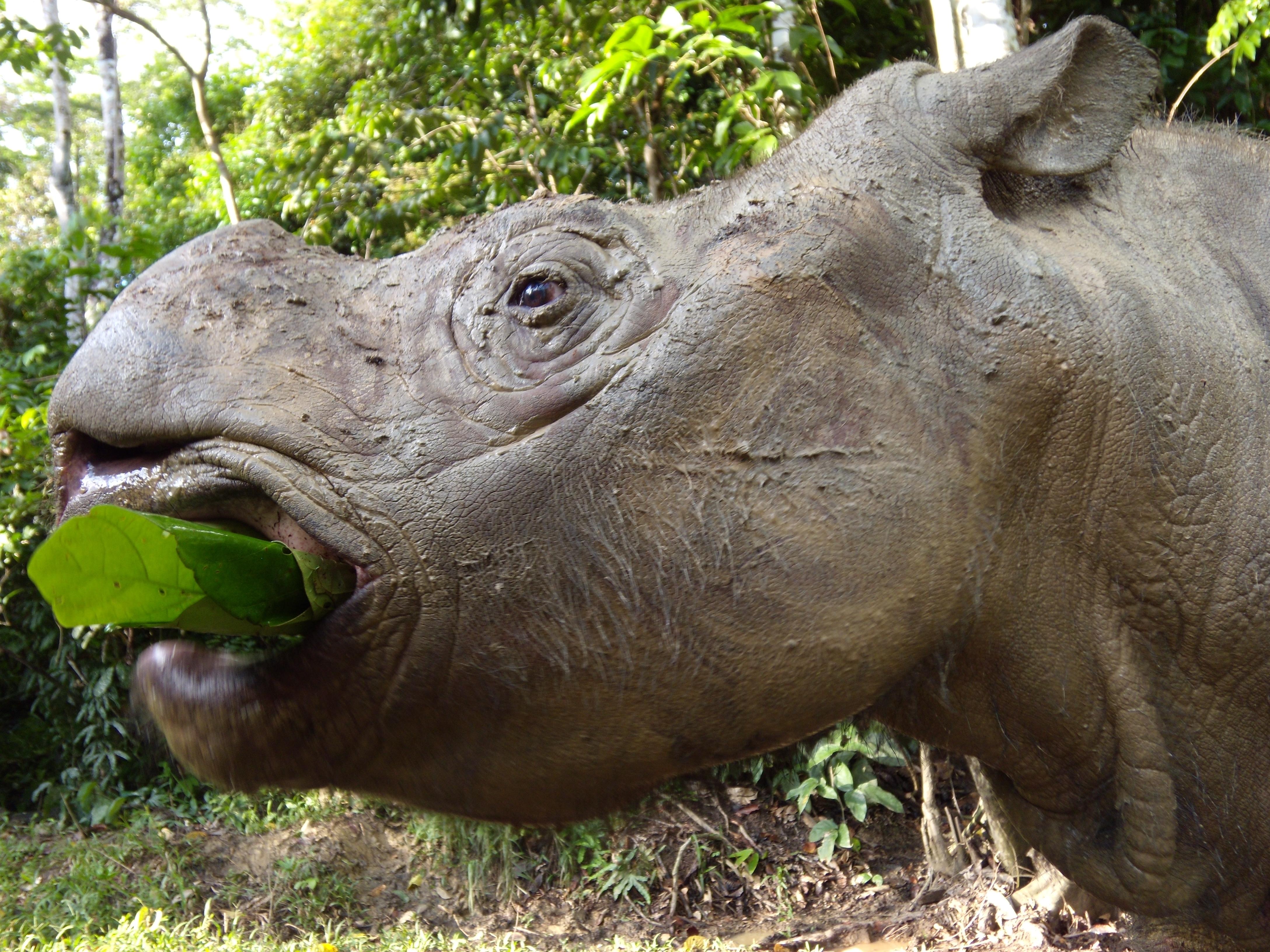 как прикажешь в дании носороги не водятся видео возвращалась работы