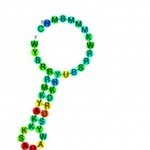 micro-RNAs