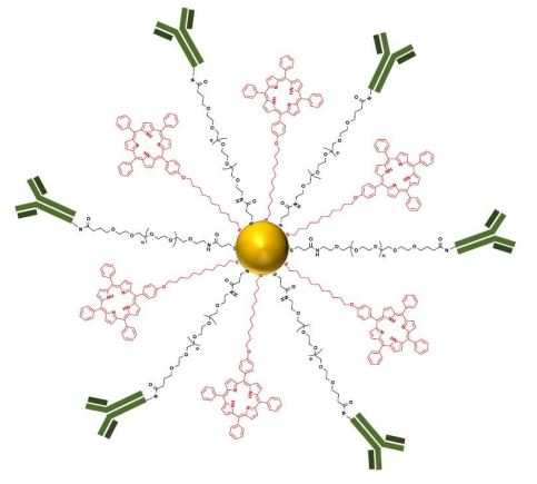 'Water soluble, multifunctional antibody-porphyrin gold nanoparticles for targeted photodynamic therapy' by Oriol Penon, María J. Marín, David A. Russell and Lluïsa Pérez-García.