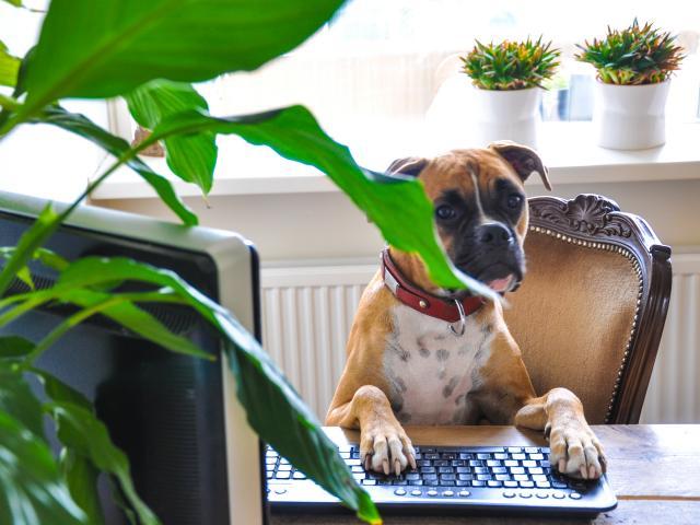 Dog behind computer