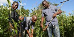Field sample training at Chitedze Research Station Malawi