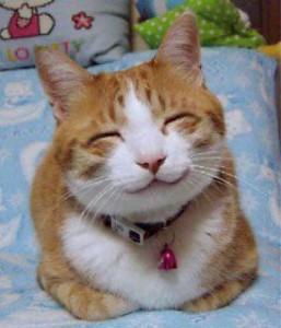 So_happy_smiling_cat