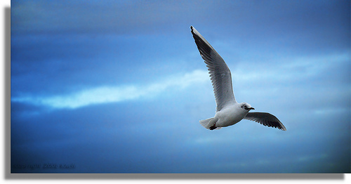 The 'spread your wings and fly' approach