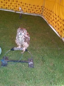 gram owl