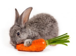 The rabbit may be cute, but the carrot is not!