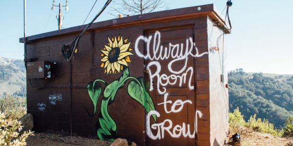 """21 lessons - a motivational image of a sunflower with the phrase """"Always room to grow"""""""