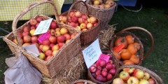 Apples for sale at the farmers' market