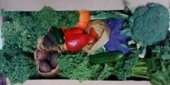 SCoop veg box