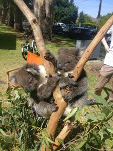 The locals in Australia are super cute!