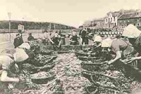 Photograph of fish workers gutting herring c.1910.