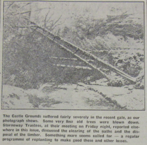 Photograph of trees in the grounds of Lews Castle blown down as a result of severe gales in February 1952 published in the Stornoway Gazette, 1 February 1952.