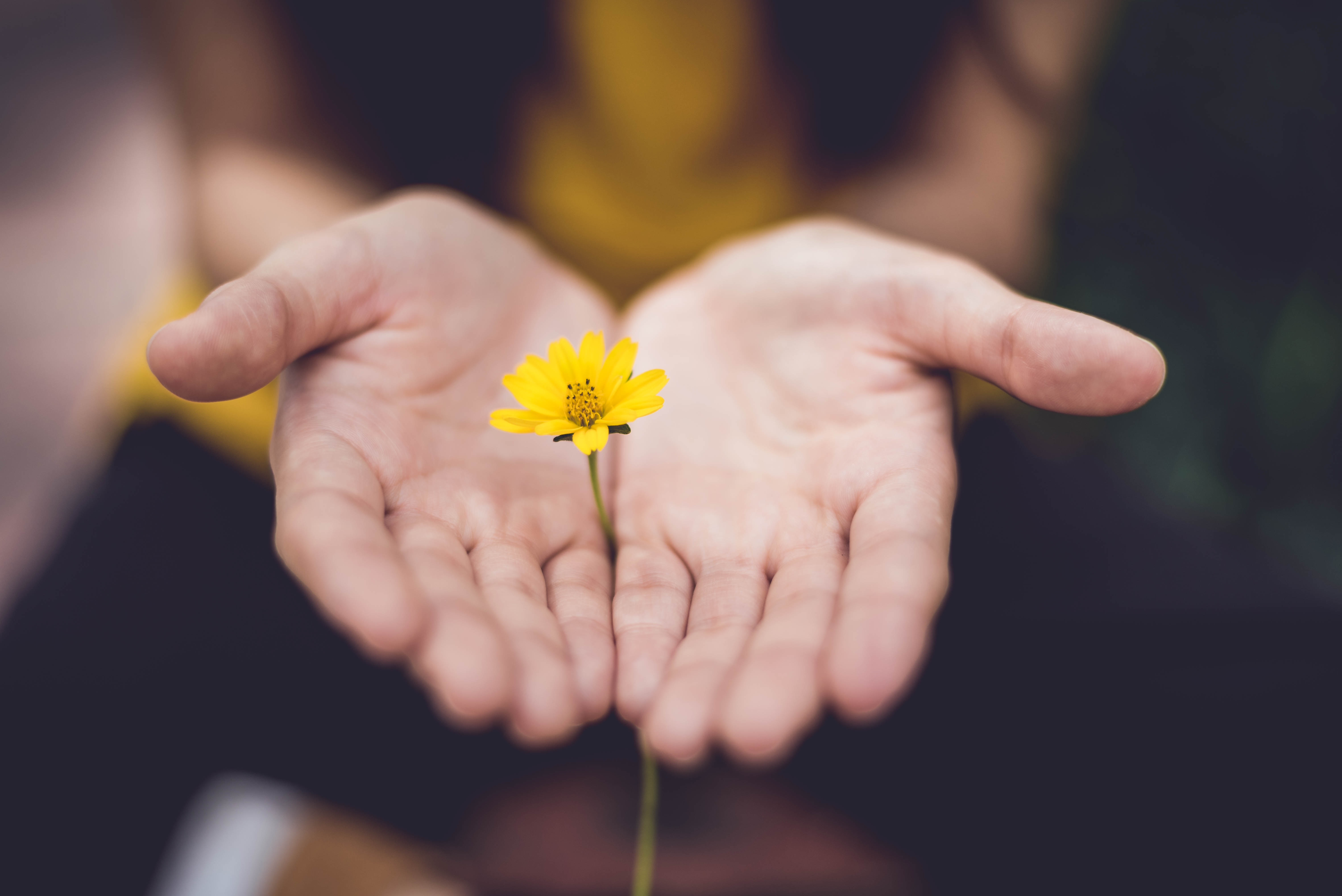 A woman holds her hands open, palms up, with a yellow flower inside.