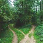 Two paths in a wood that lead in different directions.